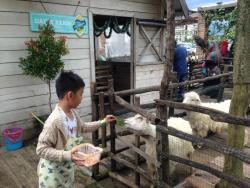 Lactasari Dairy Farm