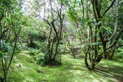 Jardim Botanico do Faial