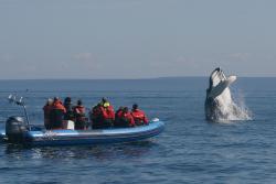 Mingan Island Cetacean Study Research Station