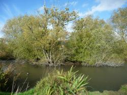 Island Pond Wood