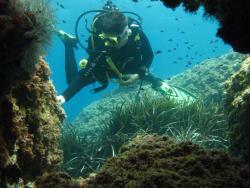 Dive & Dive Centro de Buceo