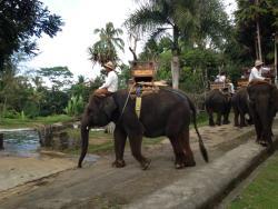 巴厘大象营