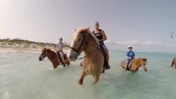 Provo Ponies