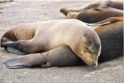 Galapagos Best - Guayaquil Day Trips