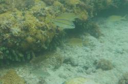 Whale Bone Bay