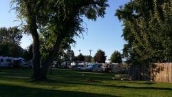 Pine Near RV Park & Campground