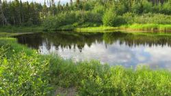 Pond on hotel land
