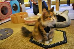 Cat Cafe Calico Kichijoji
