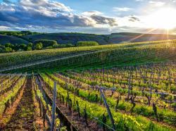 Cape Terroir Wine Masterclass & Tours