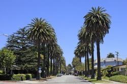 Montana Avenue