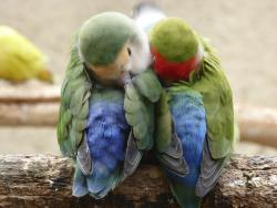 La Ferme aux Oiseaux Exotiques