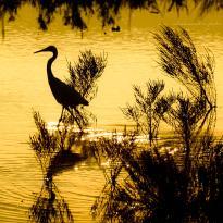 Oasi WWF della Palude La Vela