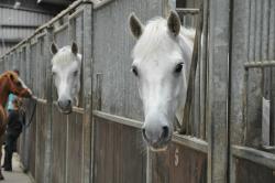 Kinsale Equestrian Centre