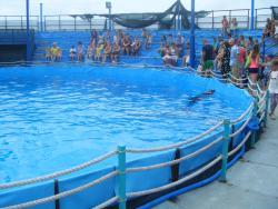 Novorossiysk Dolphinarium Sea Life
