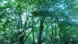Acrobranches de la Forêt des Vert Tiges