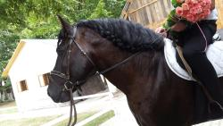 Horse Riding Club Provence