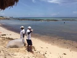 Guys clearing the seaweed