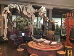 Natal Museum