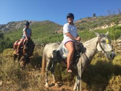 Harriets Hydra Horses