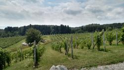 Willow Vineyards