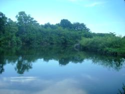 FIU Nature Preserve