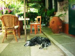 Cani e Papere