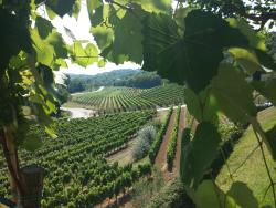 Istria Wine Tours