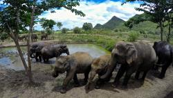 ElephantsWorld - Day Tour