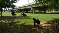 Dog Spot dog park