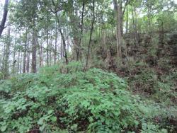 Saimyoji Castle Ruin