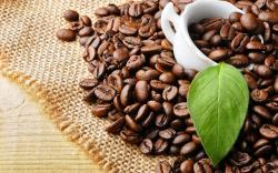 BuStop Coffee
