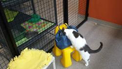 The Cat Depot