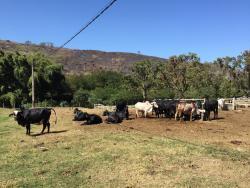 Fazenda Sao Luiz da Boa Sorte