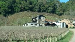 Cantina Tonet Winery