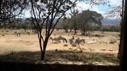 Maralal Safari Lodge
