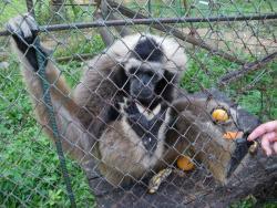 Teuk Chhou Zoo