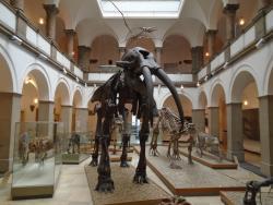 Paleontological Museum Munich