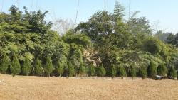 Plantation in surrounding area