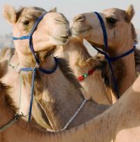 My Abu Dhabi Holidays