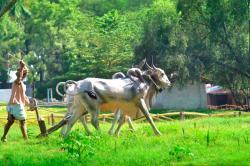 Gram Sanskruti Udyan Village Park