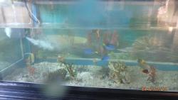 Aquarium reception counter