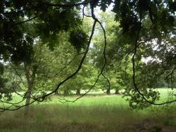 Loopgravenpad Mastenbos