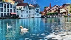 Patos nadando no rio em frente ao hotel