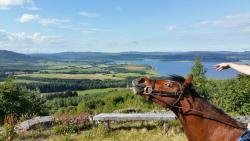 Hollingwells Equestrian