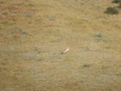Soapstone Prairie Natural Area