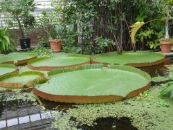 Botanical Gardens (Hortus Botanicus)