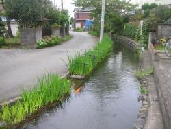 Shimbori Canal