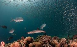 Atoll Scuba