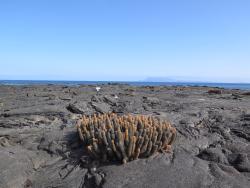 Punta Espinoza