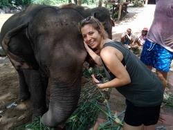 The Chiangmai T.U.M Travel - Elephant Trekking Care